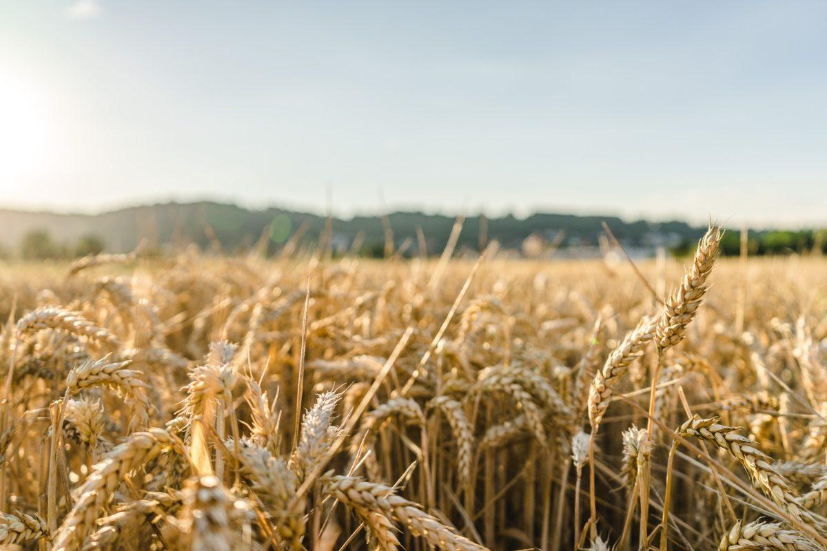 Témoignage client : Agribio-Union dématérialise ses factures